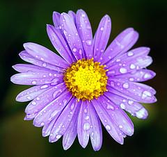 Novembre, la cura delle piante, dell'orto e del giardino